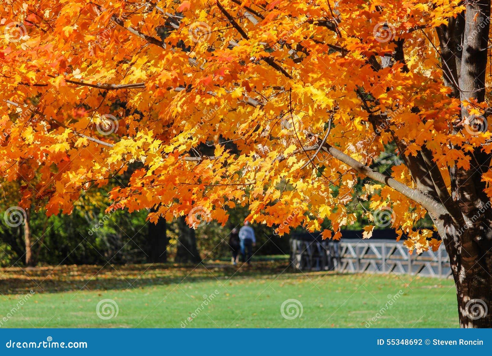 Leisurely spacer Przez parka Na Pogodnym jesień dniu