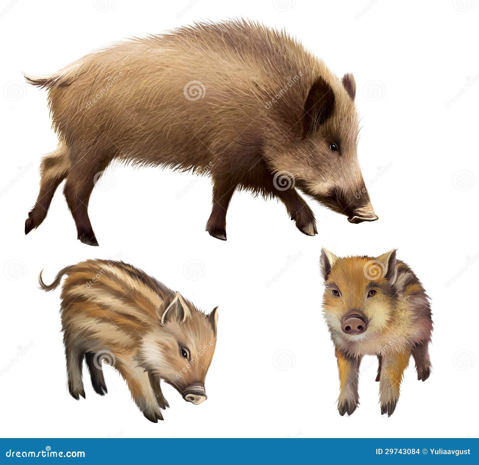 Varrão familly, dois leitão e porcos pequenos da mãe. Ilustração realística isolada no fundo branco