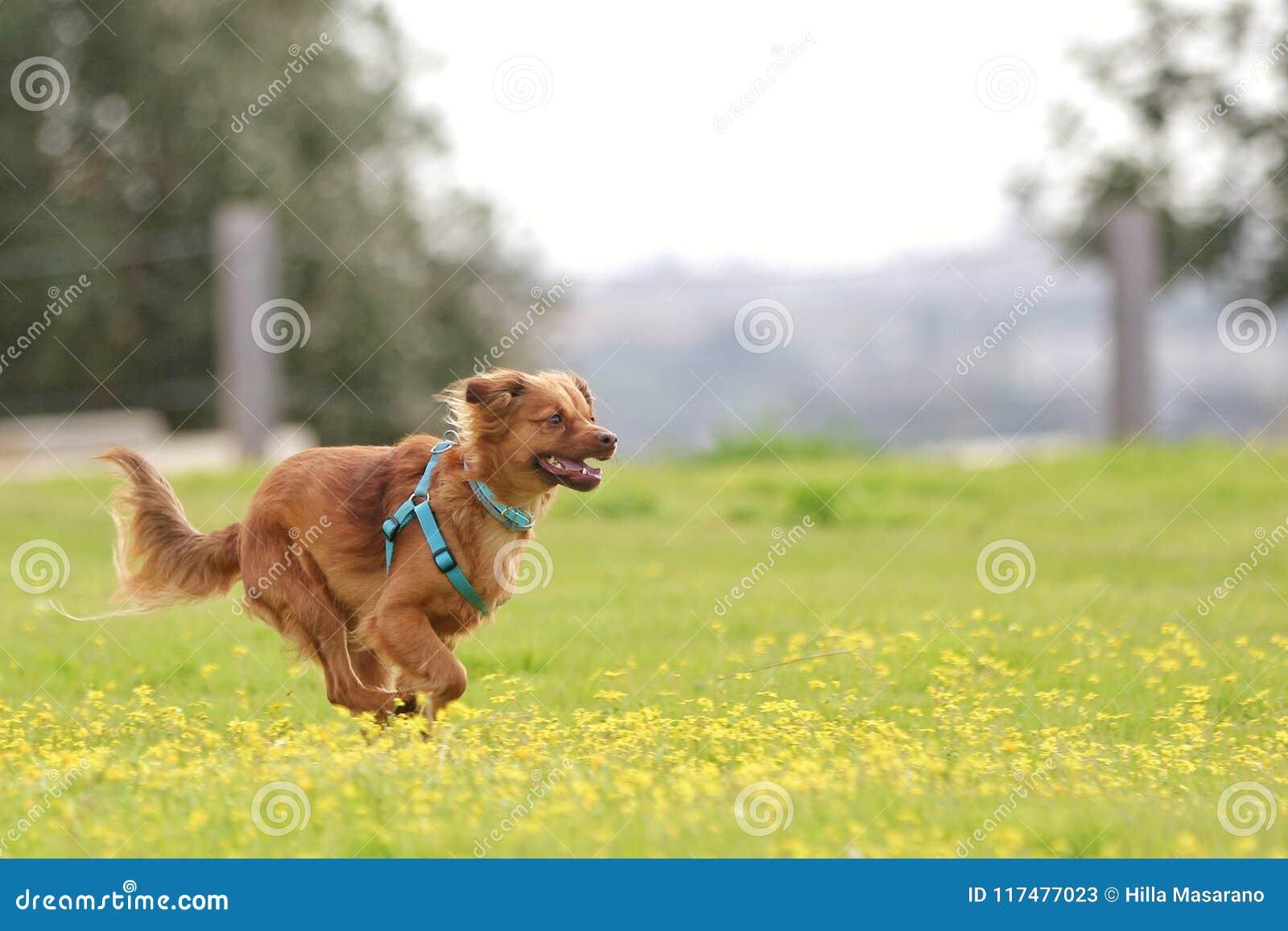Leitoso o cão
