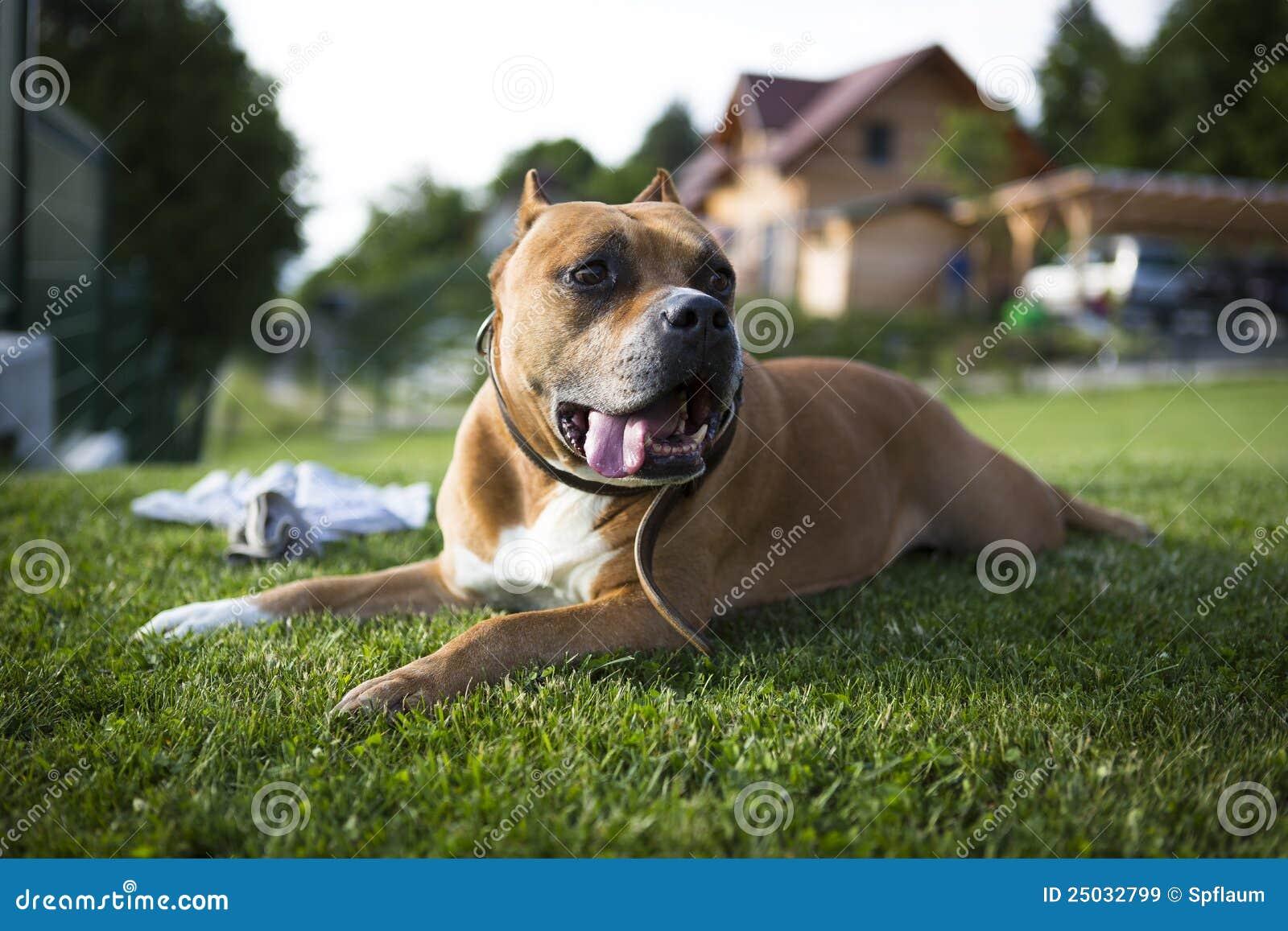 Leka för hundgräs