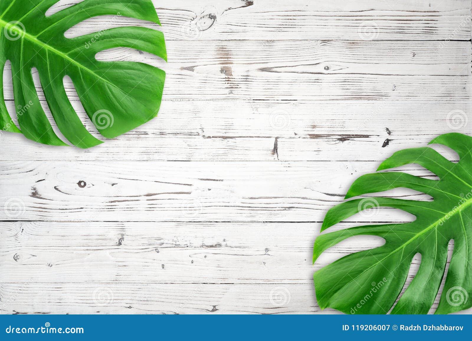 Lekmanna- grönt tropiskt blad för minsta sammansättningslägenhet Idérik ram för orienteringsvändkretssidor med kopieringsutrymme