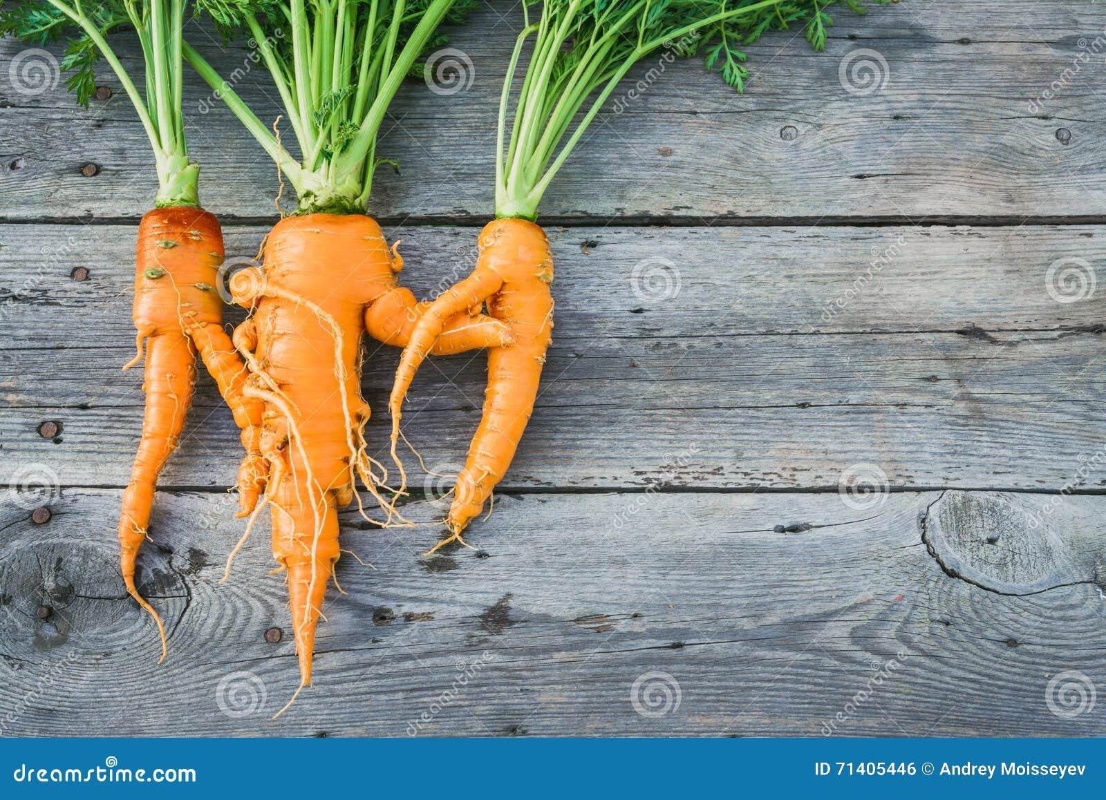 In lelijke organische wortel