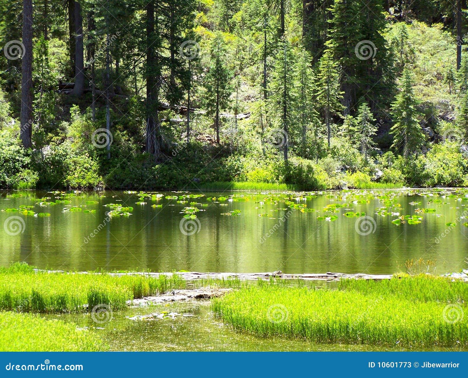 Leluja jeziorni ochraniacze