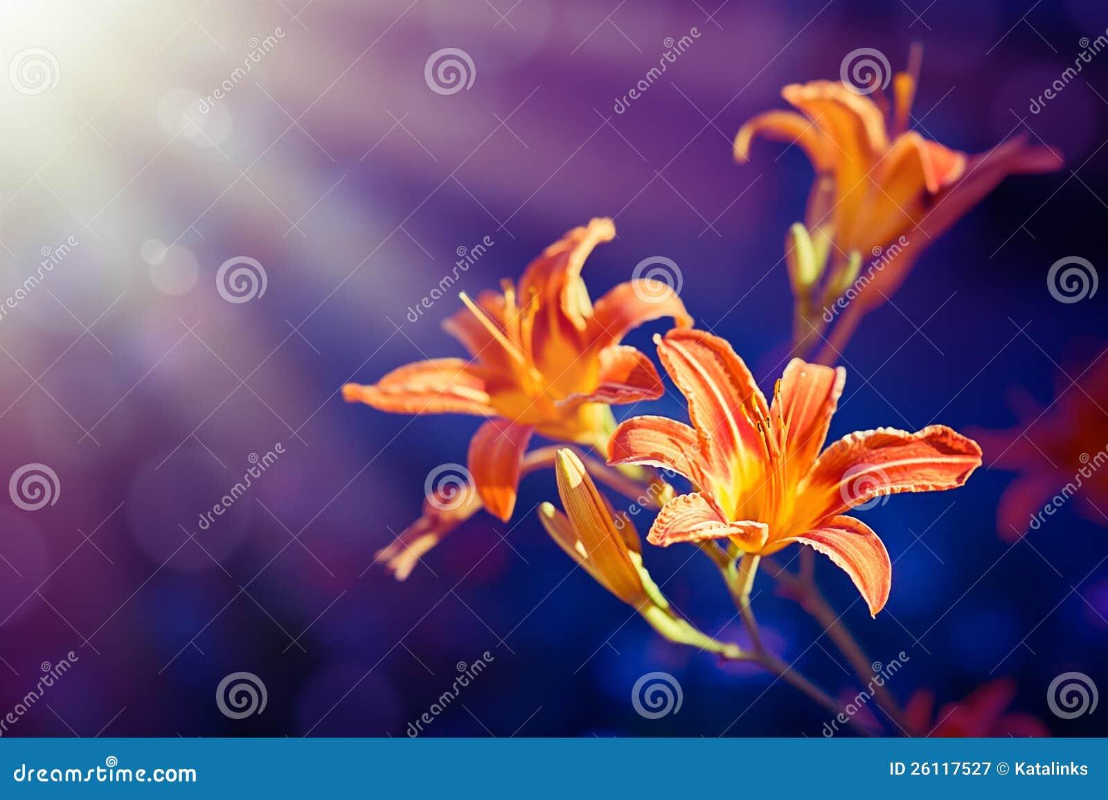Leluja Kwiaty