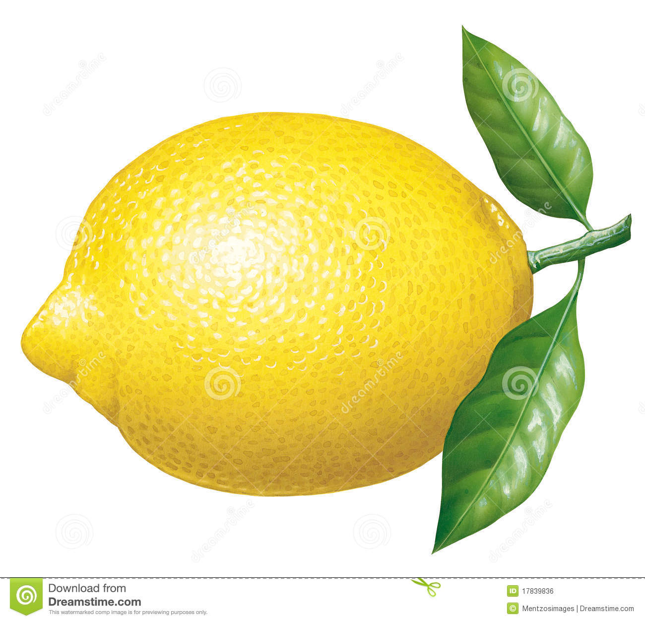 Royalty Free Stock Image Lemon Image17839836 on Lemon Border Clip Art