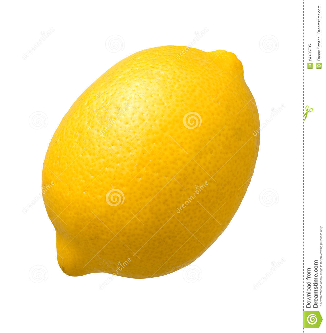 Draw Plan Lemon Isolated Royalty Free Stock Photo Image 24495795