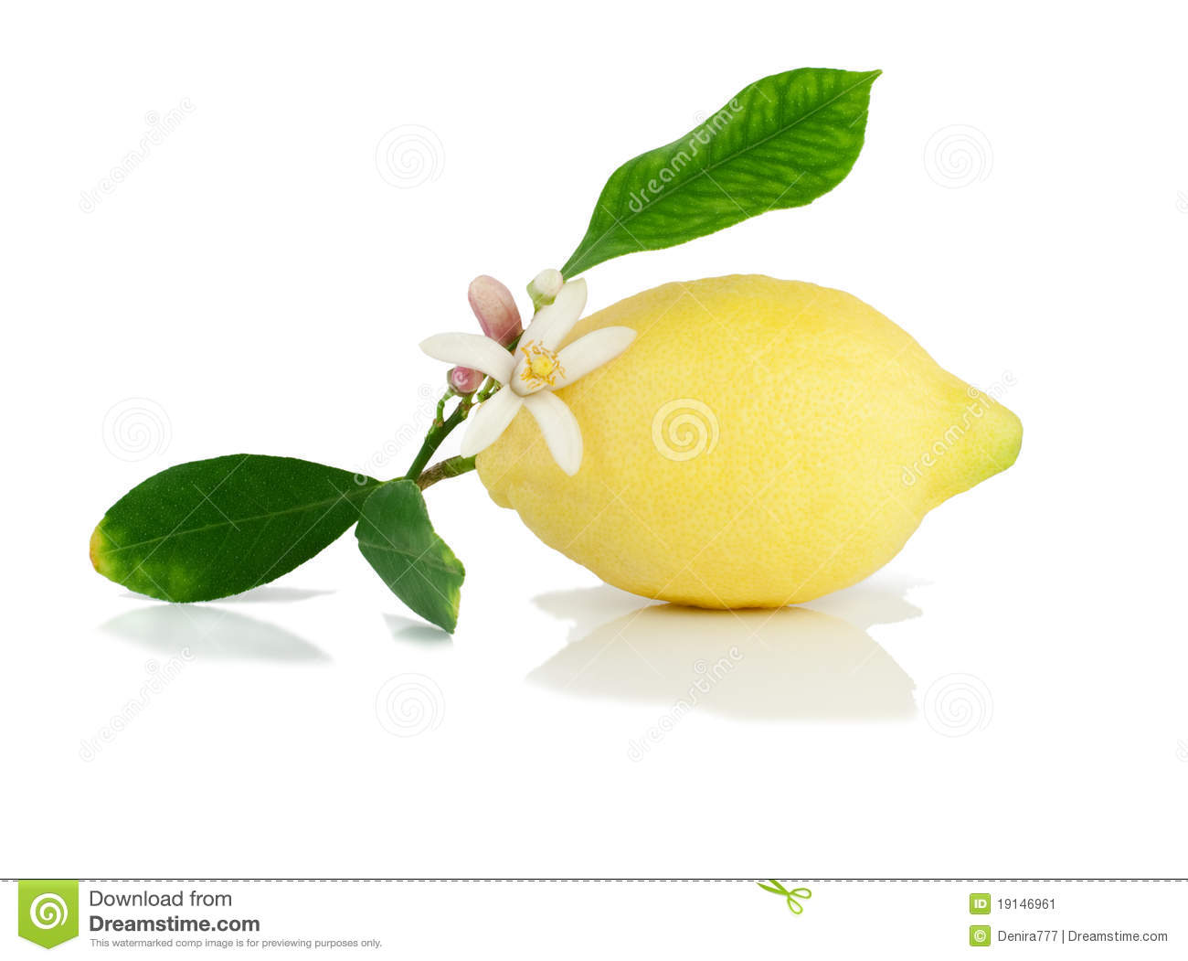 Lemon On A Branch With Leaves And Flower Stock Image