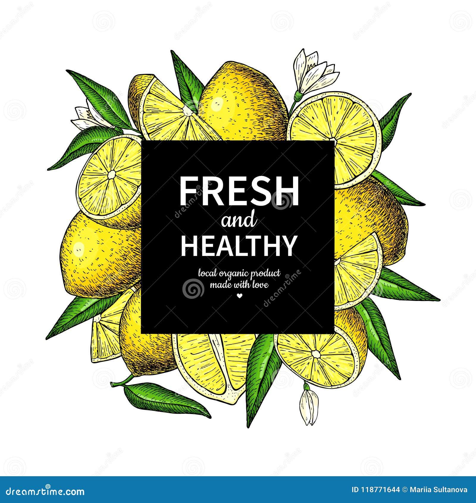 lemon frame vector drawing citrus fruit square label template stock
