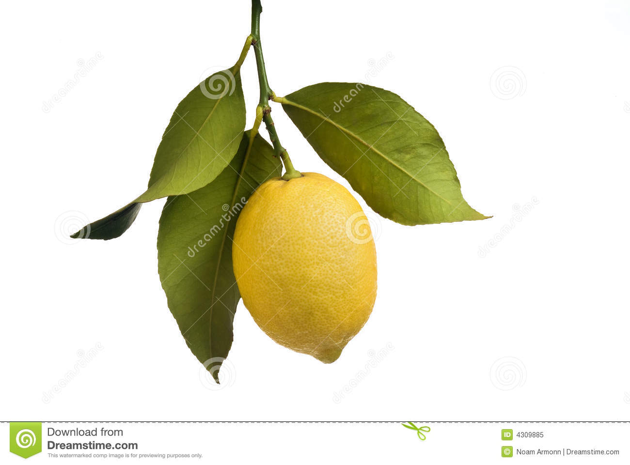 Different herbs royalty free stock image image 16265346 - Lemon With Leaves Isolated Royalty Free Stock Photo