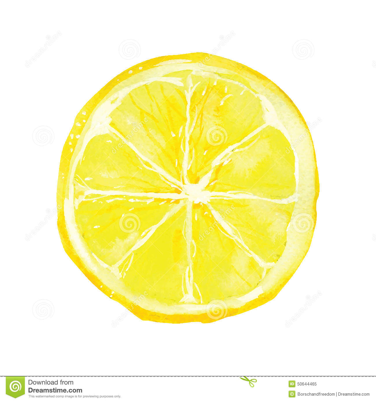Slice of lemon drawing by watercolor, hand drawn vector illustration.