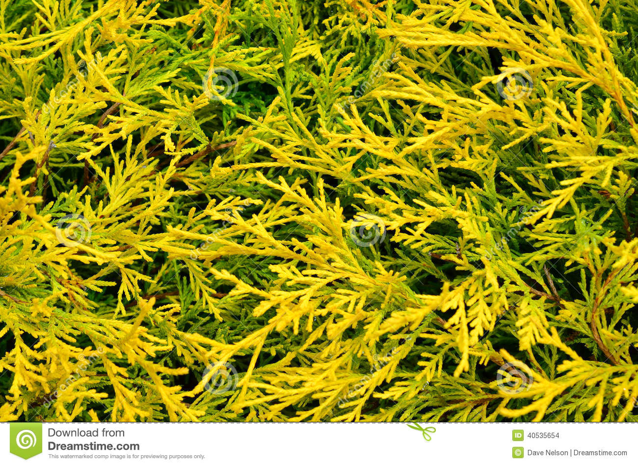 lifenet helicopter with Stock Images Lemon Threadbranch Sawara Cypress Closeup Accent Shrub Background Image40535654 on Article 57341404 B9ef 5b78 A385 2a0ceee59556 in addition Player Benched Ice Rescue Causes Miss Team Bus in addition 77581610 moreover Lugoff Fire Works Major Entrapment together with No Adianta Parecer Preciso Ser.