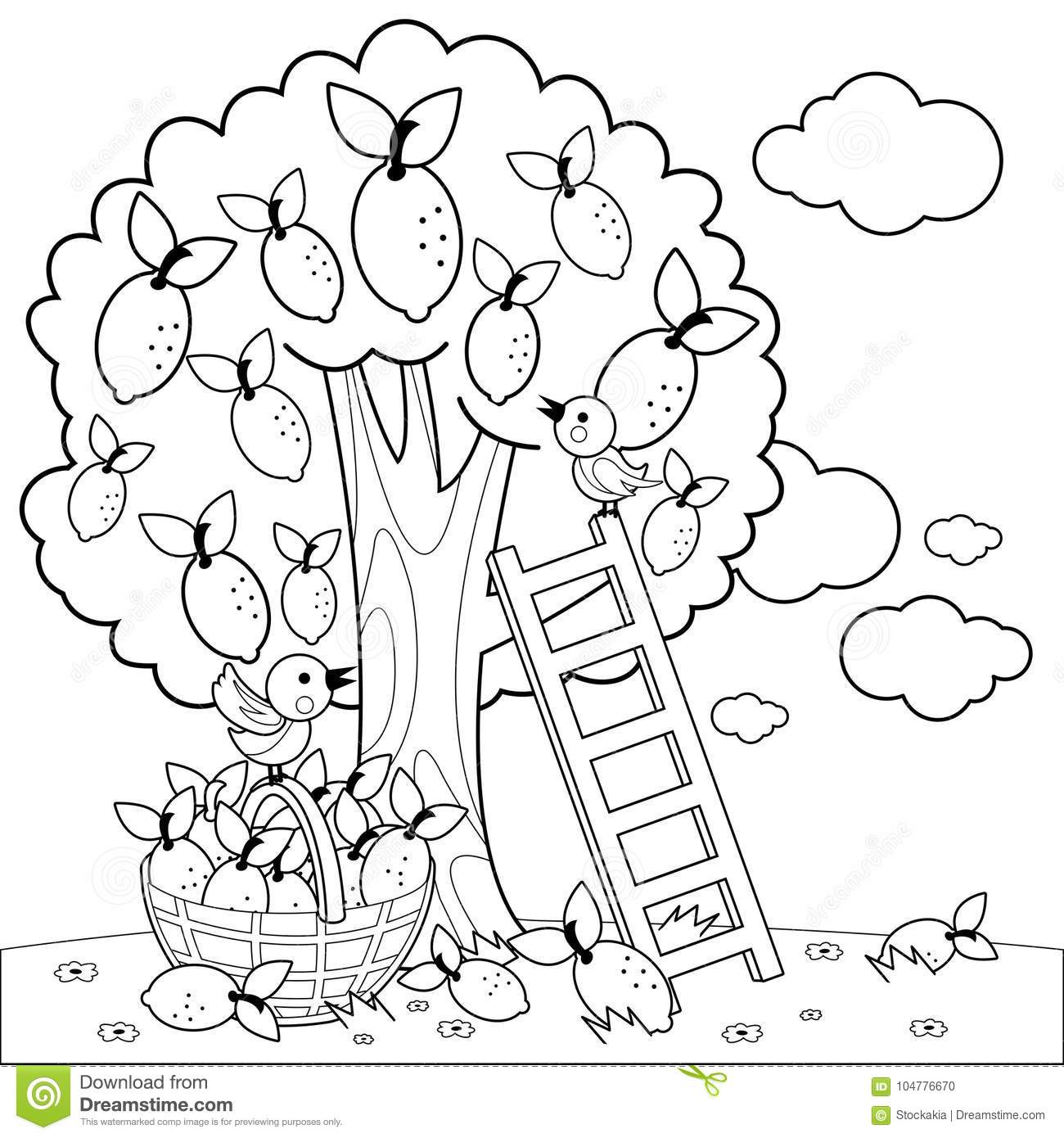 Lemon Tree Harvesting Coloring Book Page Stock Vector