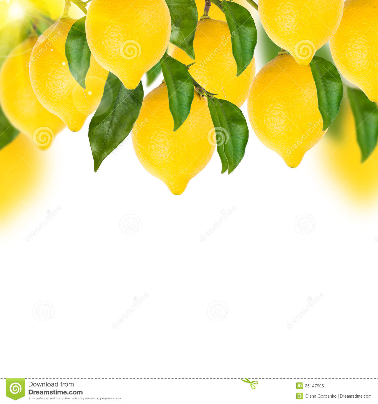 Different herbs royalty free stock image image 16265346 - Lemon Tree On A White Royalty Free Stock Photo