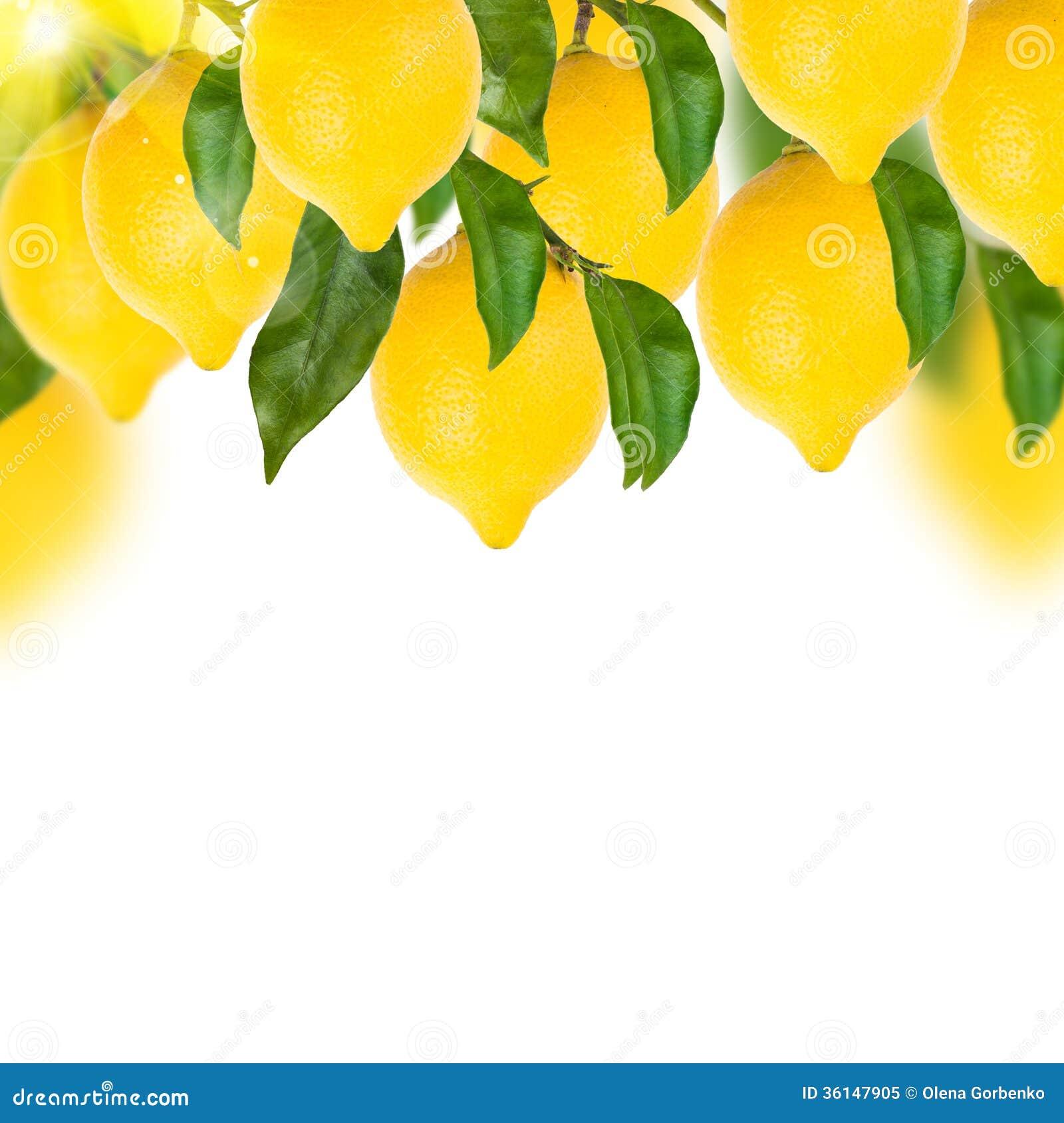 Lemon Tree On A White Royalty Free Stock Photo Image