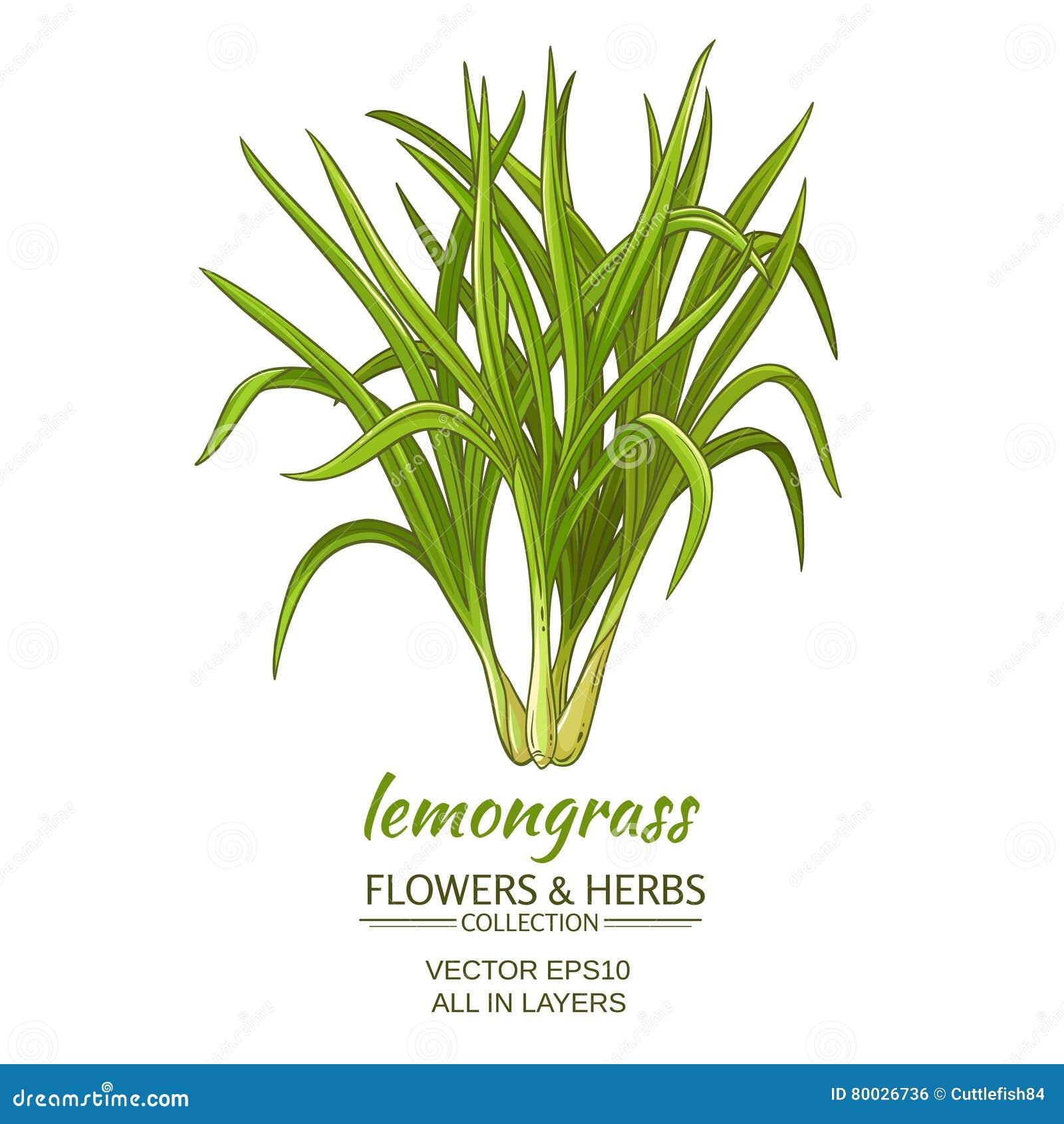 Lemongrassvektorillustration