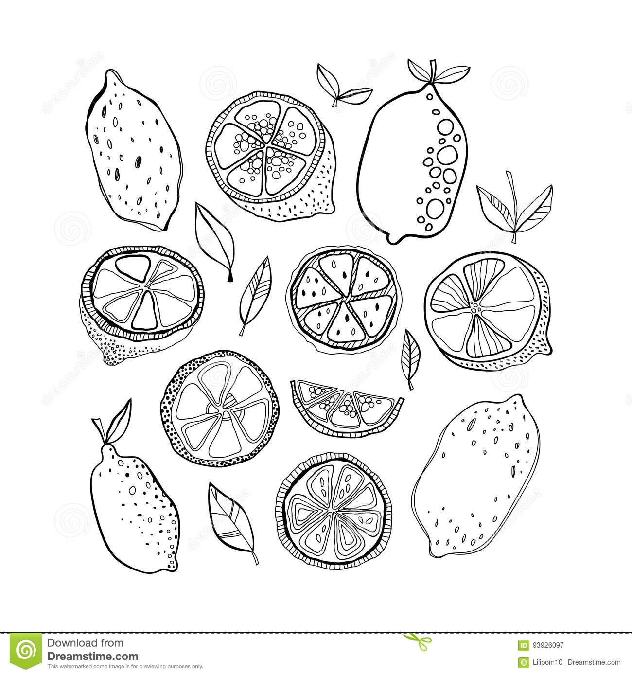 Black and white citrus fruits for coloring pages doodle illustration