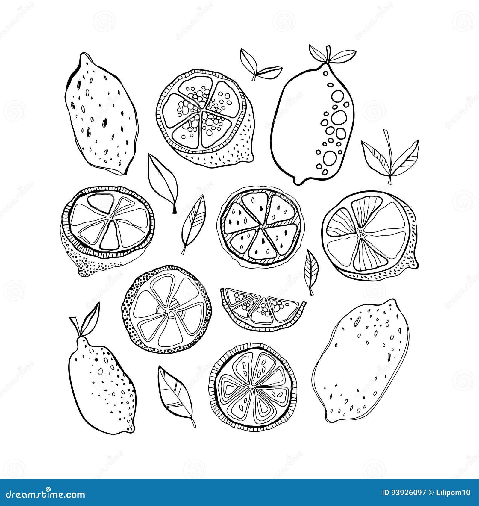 Coloring Pages Citrus Fruit