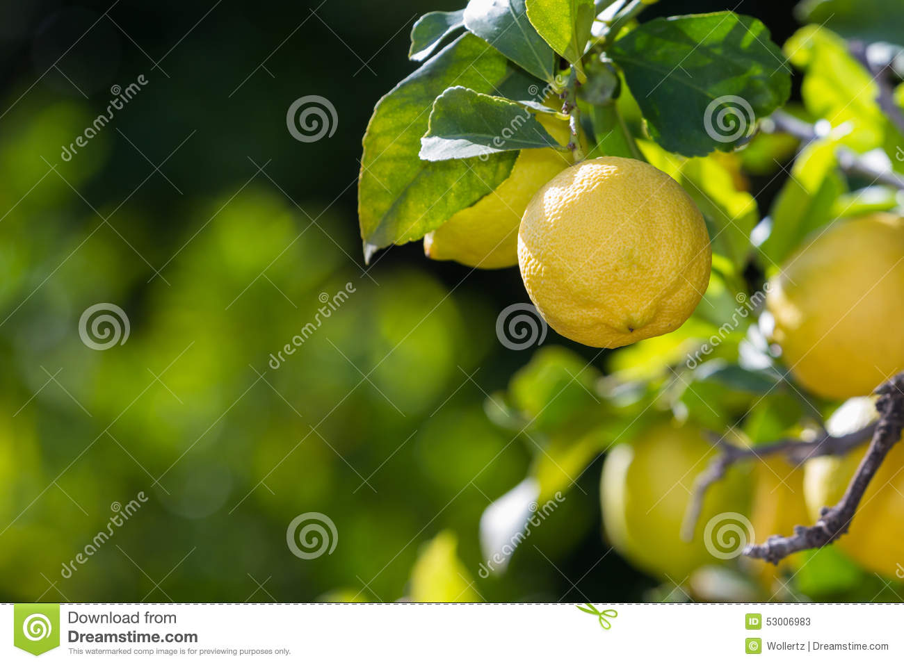 Lemons in California