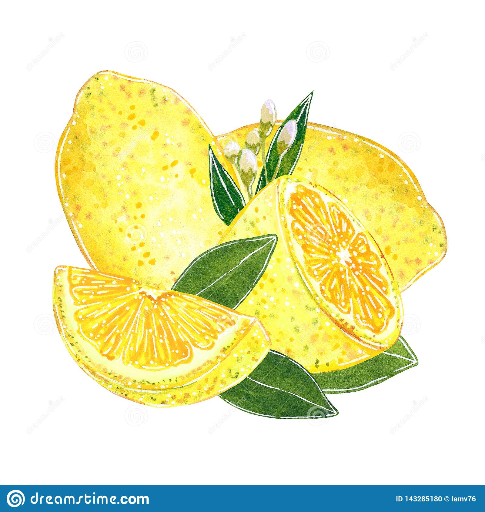 Lemons with cut slices and with leaves illustration for jam, juice, summer menu. Hand drawn watercolor illustration