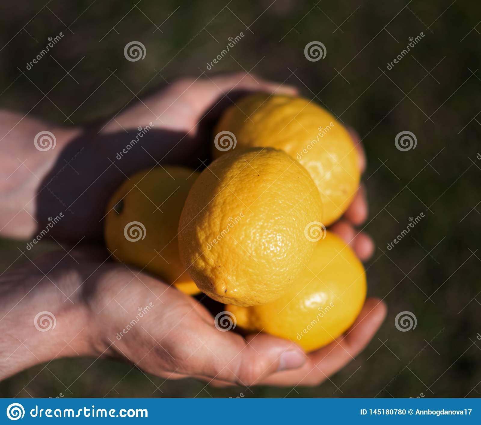 Lemons in the hands outdoors