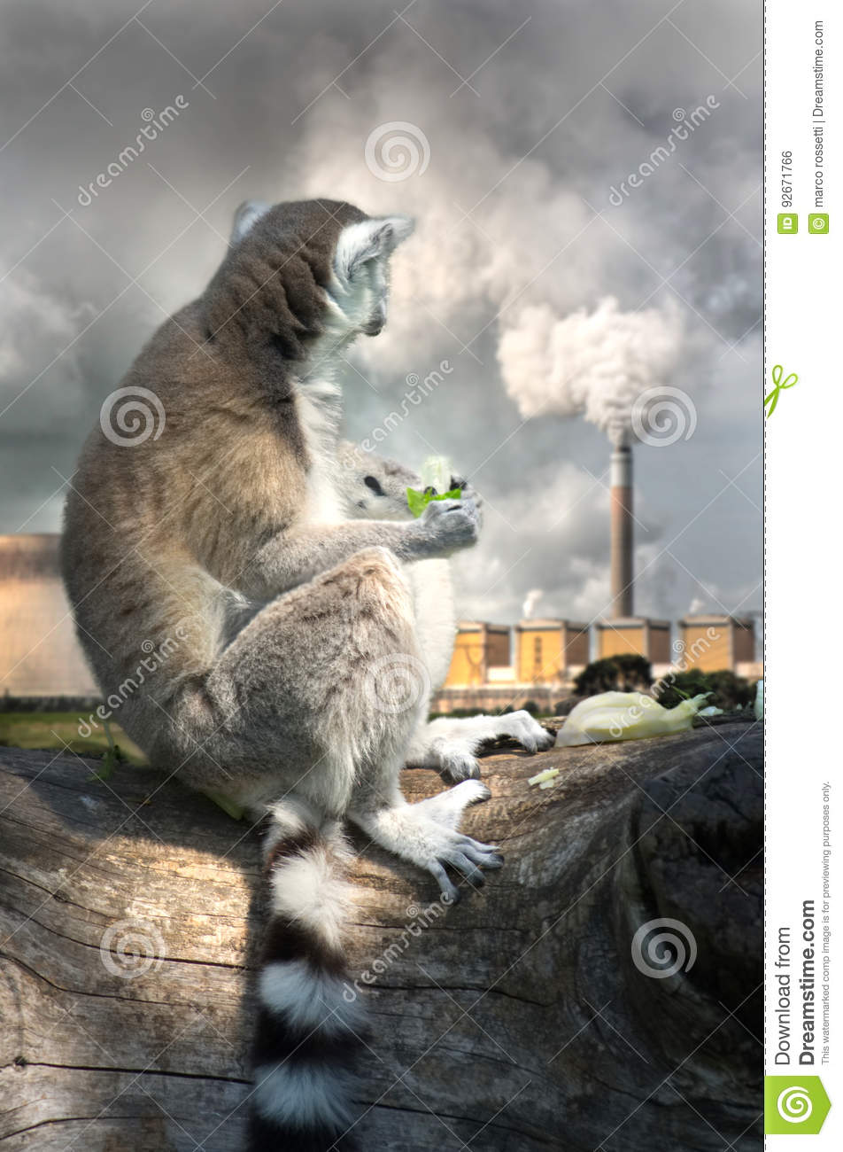 Lemur eating salad, looking sadly at the chimney of a thermal power plant