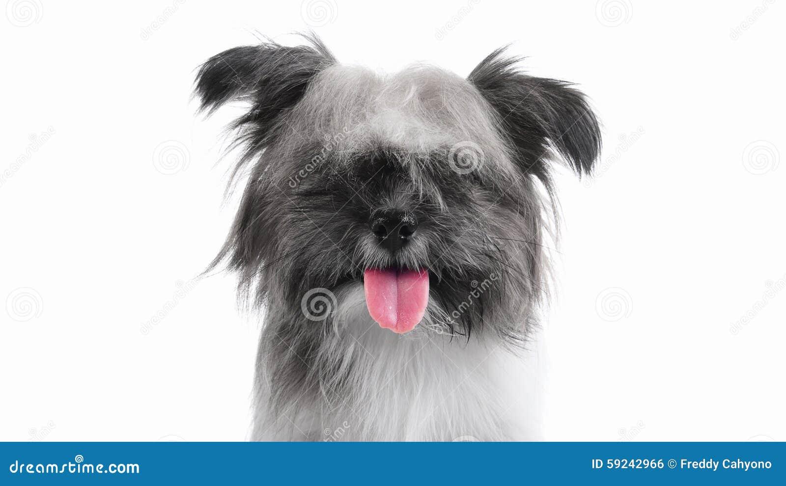 Download Lengua Feliz Del Perrito Hacia Fuera Foto de archivo - Imagen de corte, expresión: 59242966