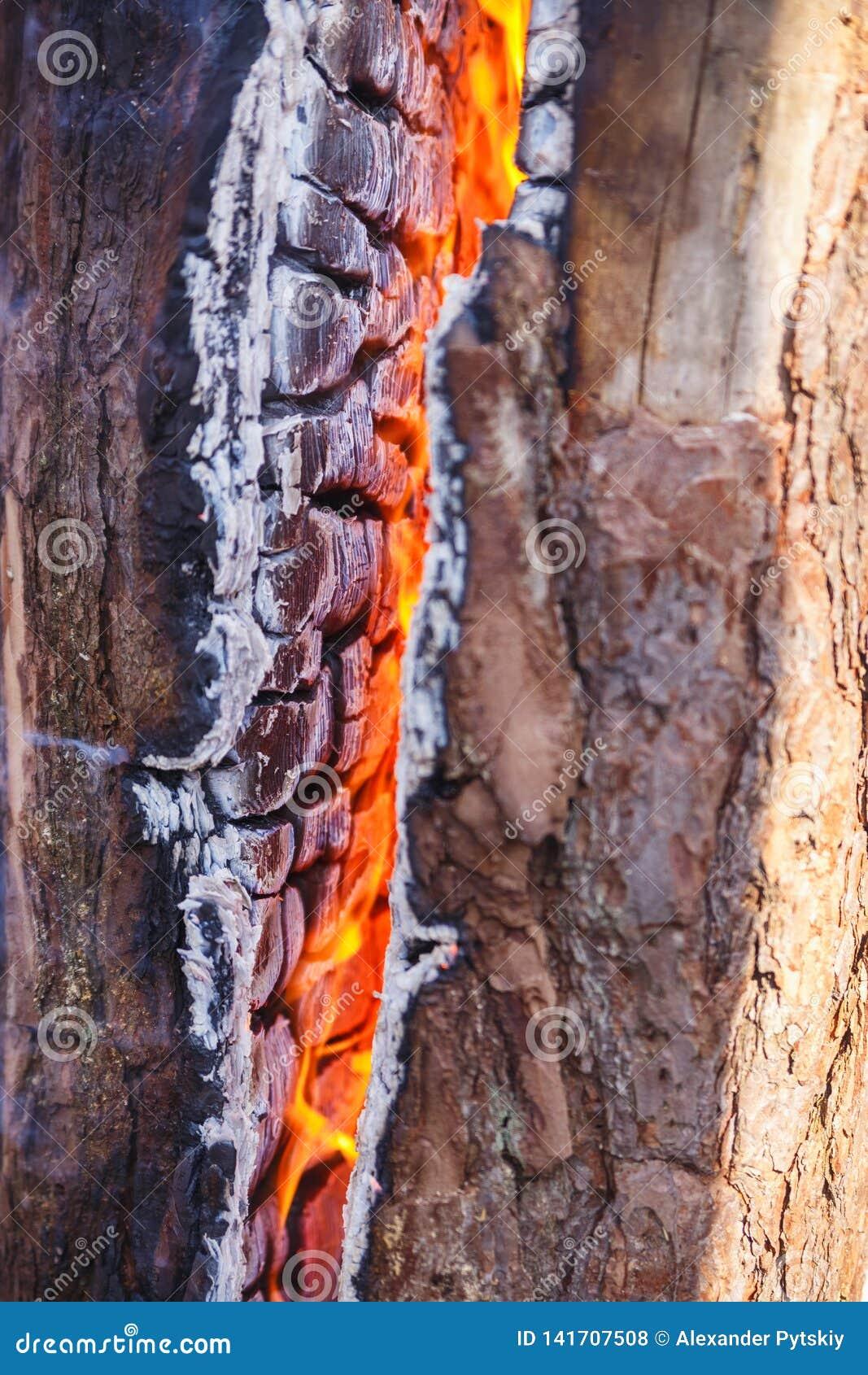 Lenha que queima-se em um fim do fogo acima carvões