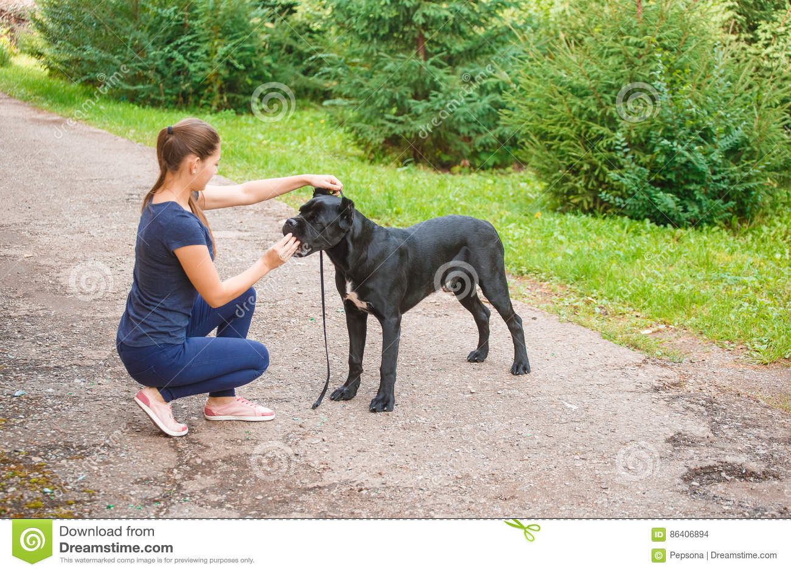 Lenker Mit Einem Hund Cane Corso Italian Mastiff Stockfoto - Bild ...