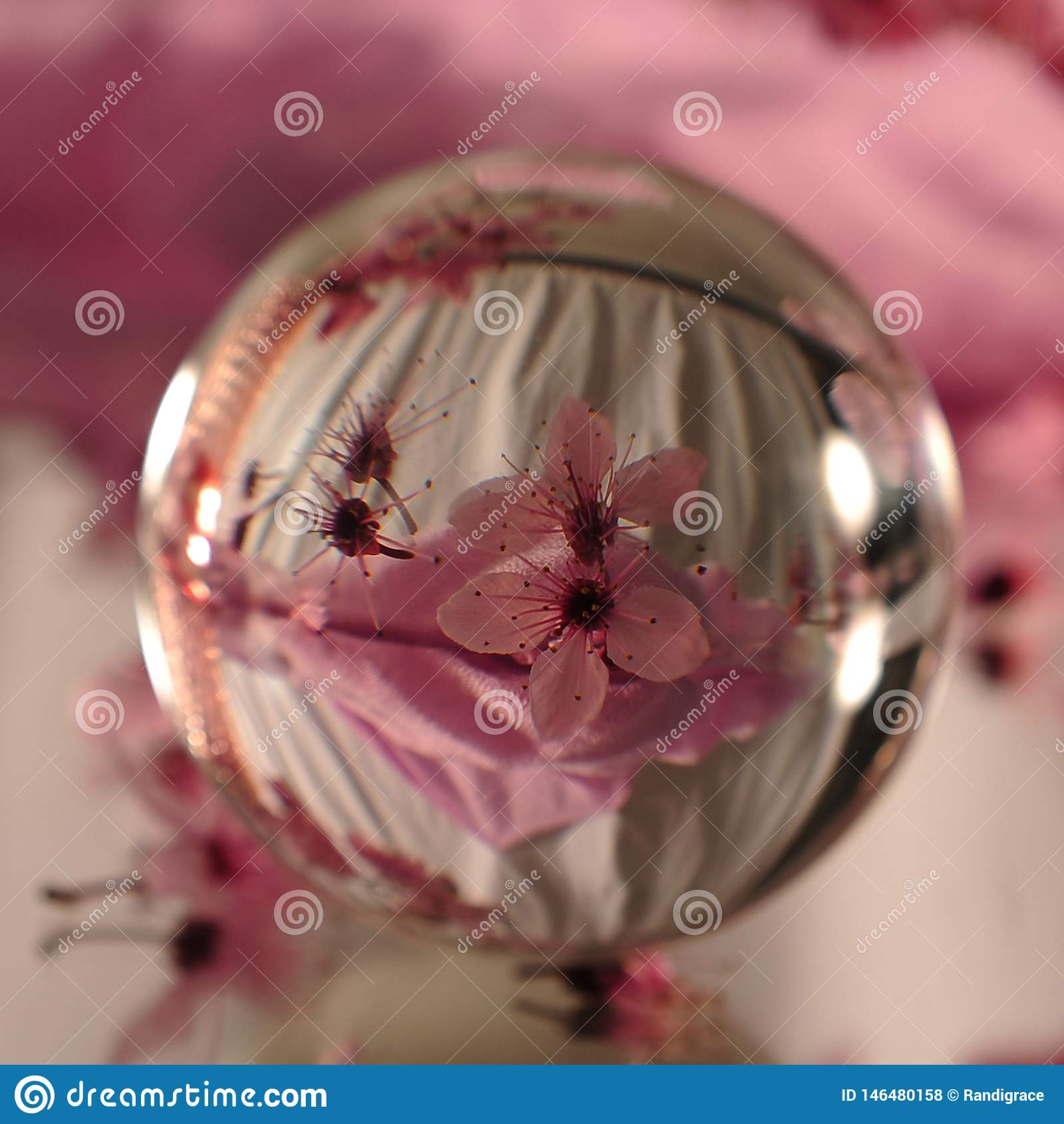 Lensbal met Roze Cherry Flowers