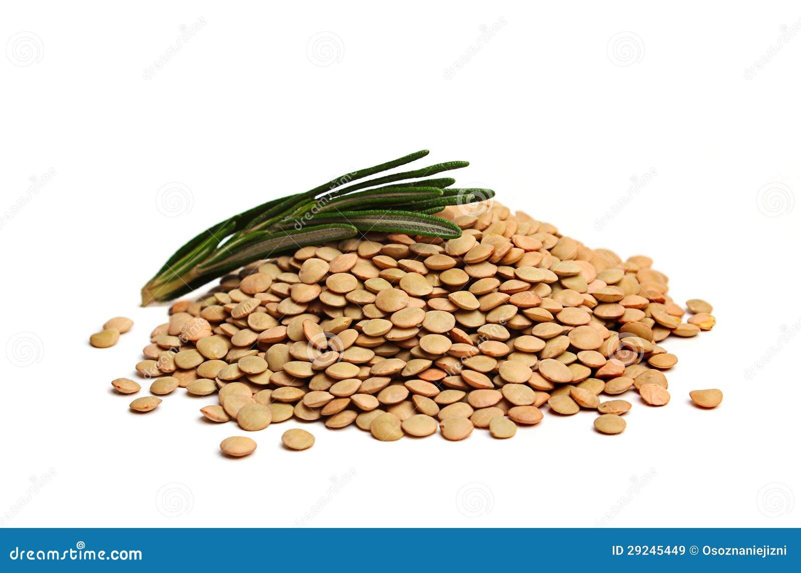 Download Lentilhas Cruas Com Rosemary Imagem de Stock - Imagem de lunch, closeup: 29245449