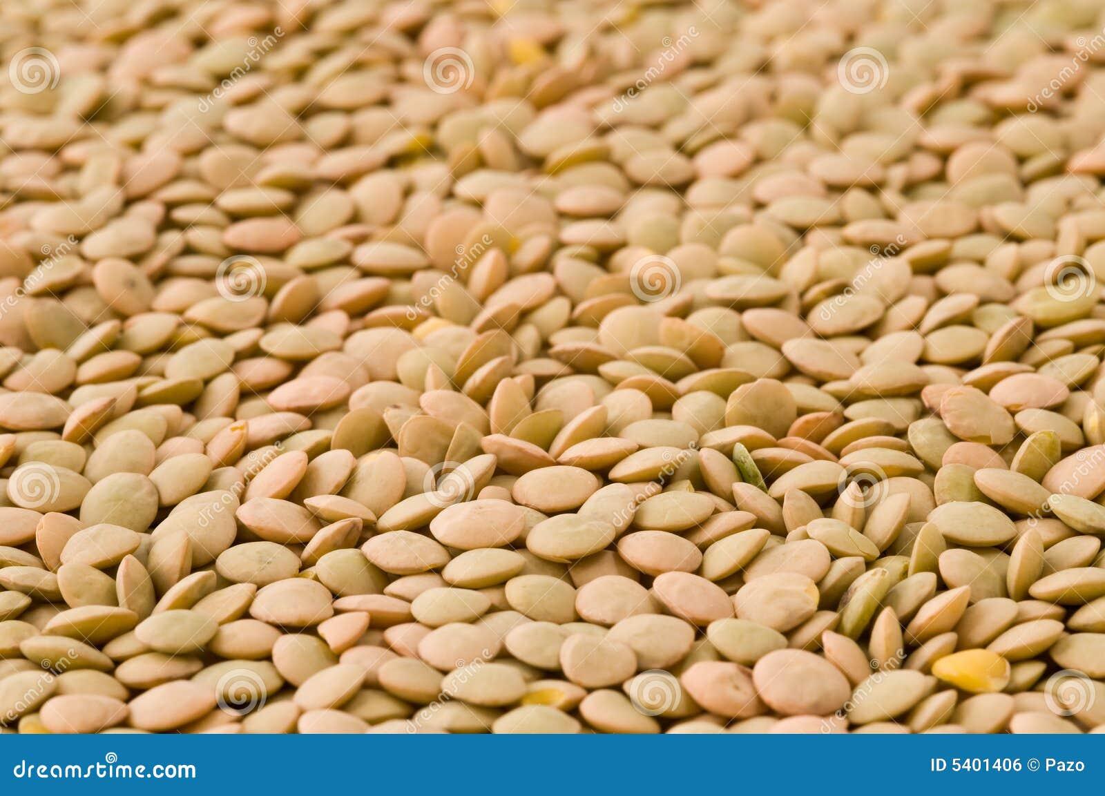 Lentilles sèches