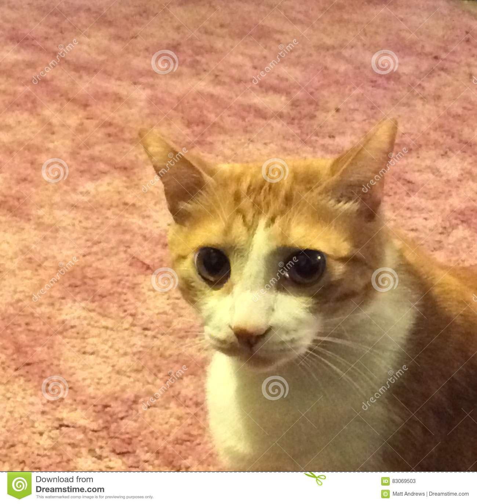 Leo kota zakończenie up