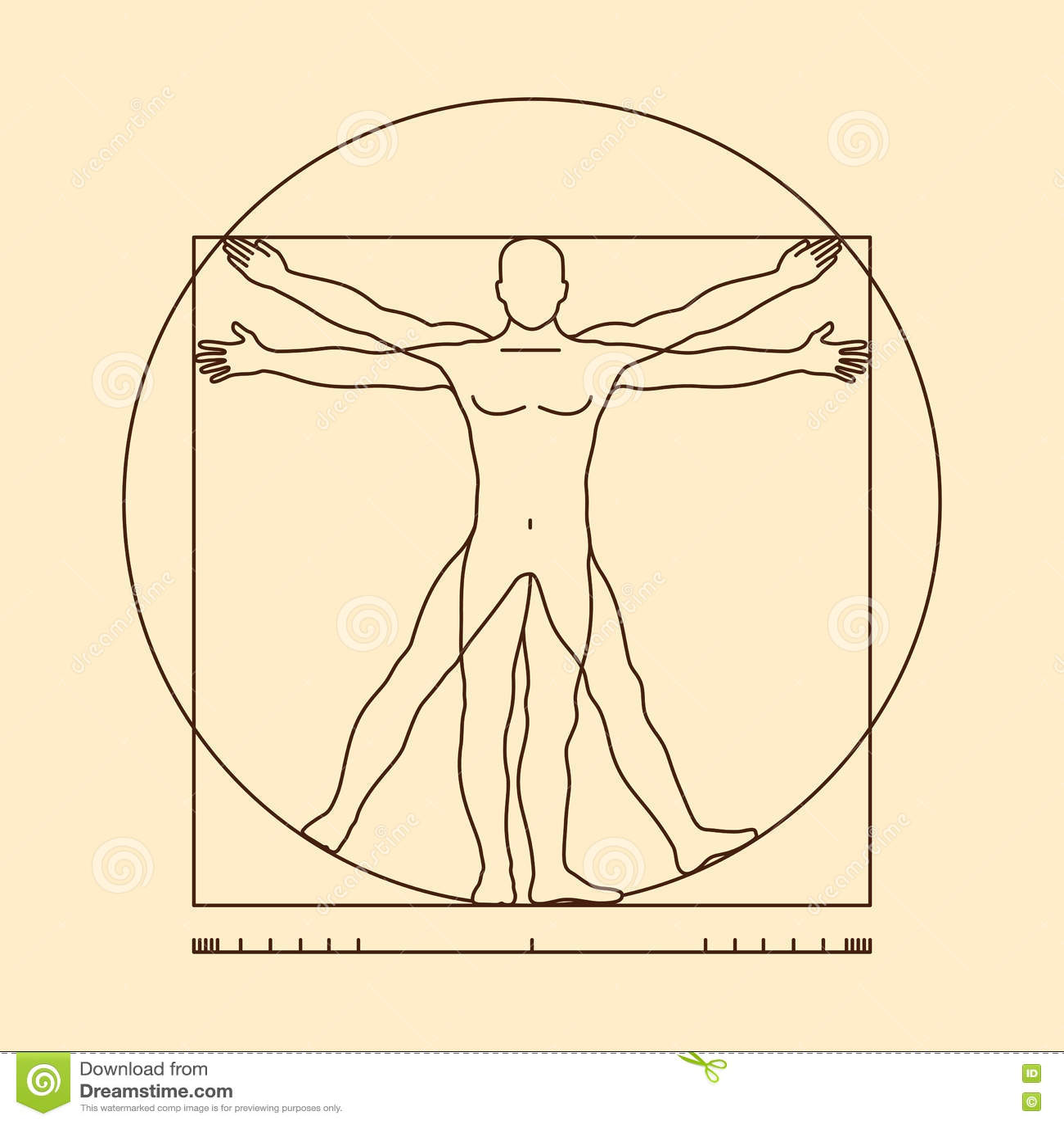 Leonardo Da Vinci Vitruvian Man Vector Illustration Stock Vector ...