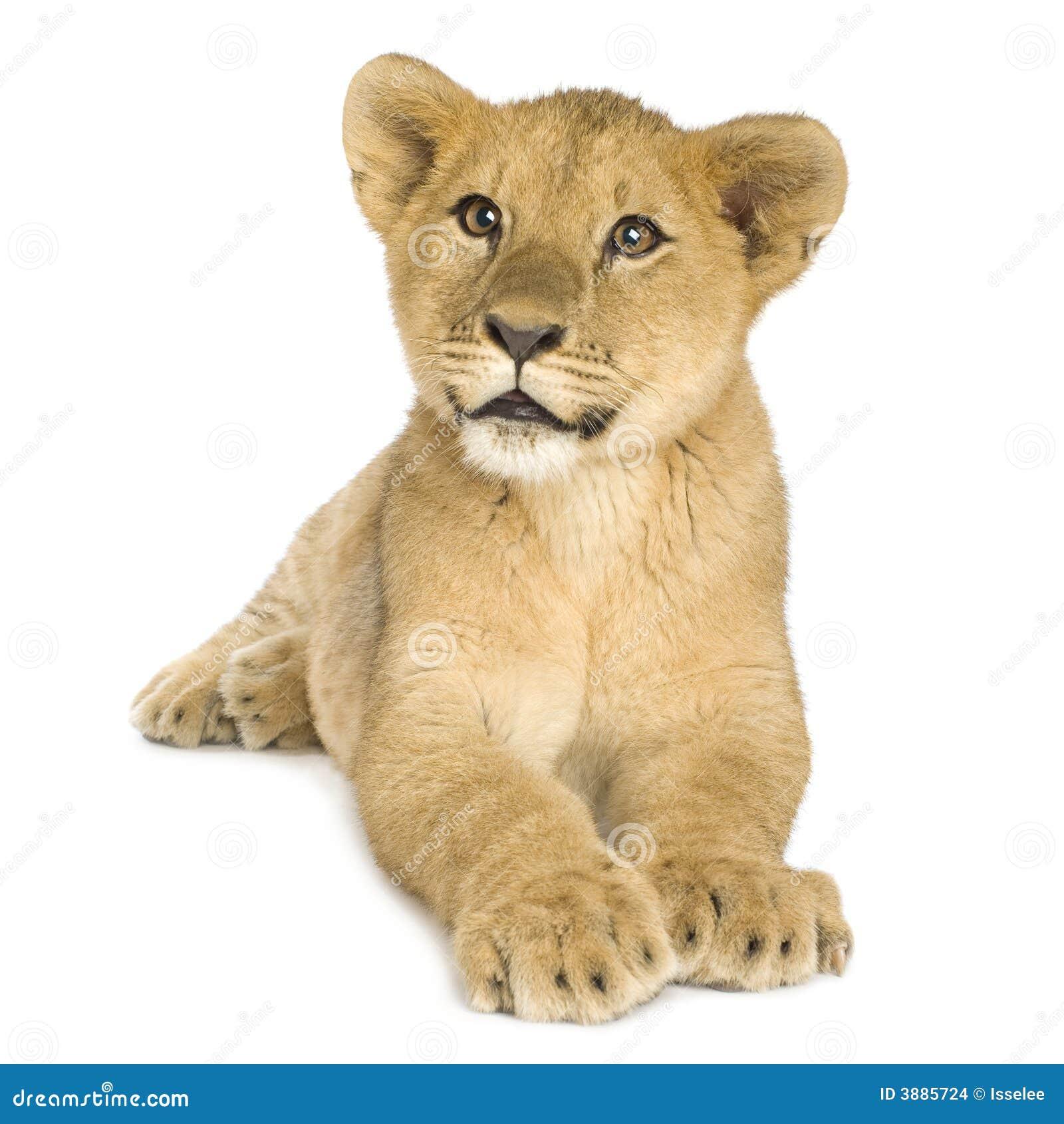 Leone Cub (5 mesi)