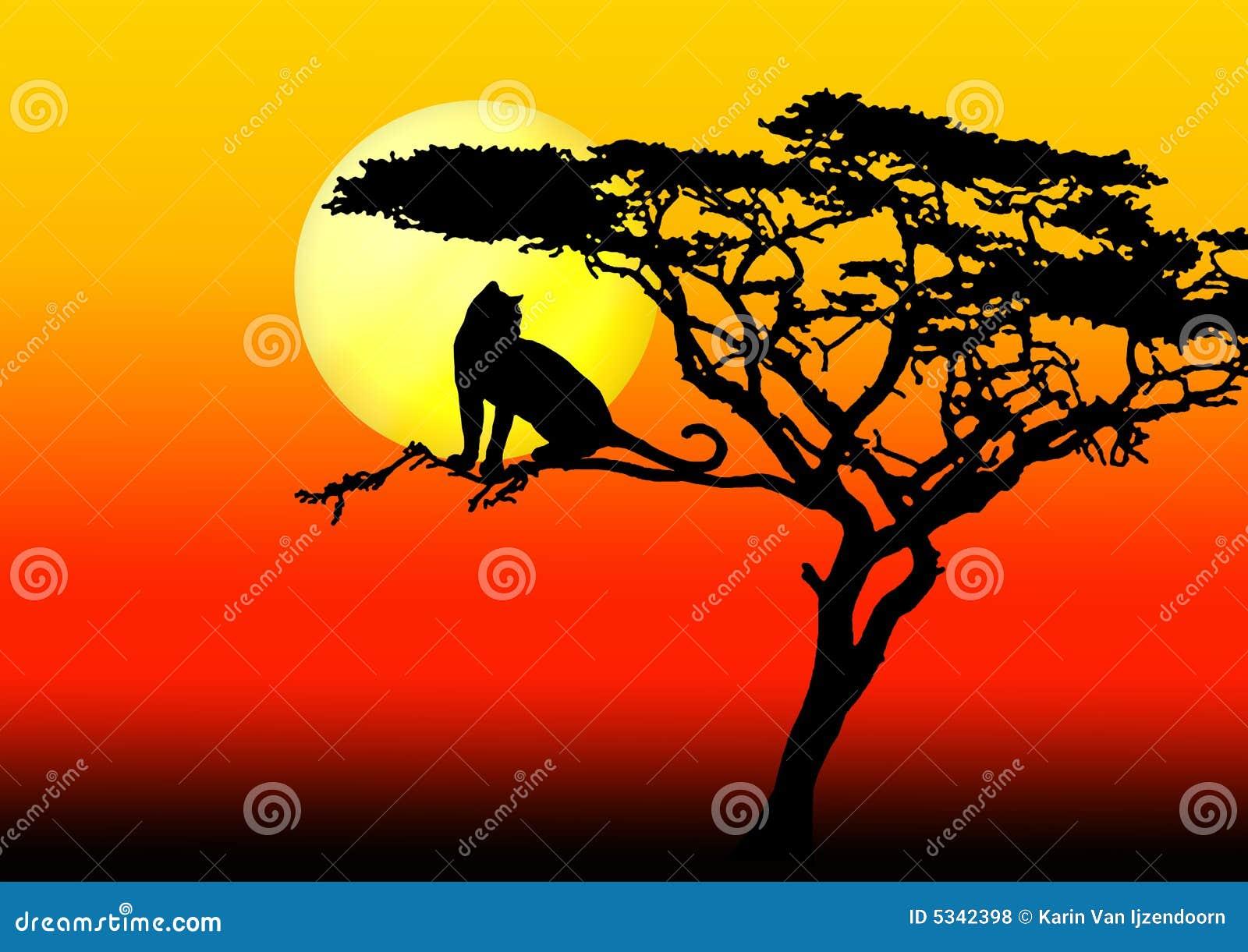 Leopard δέντρο ηλιοβασιλέματος