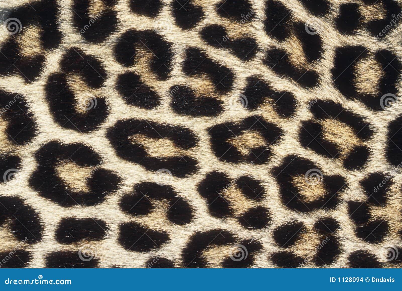 Schließen sie herauf muster der leopard haut