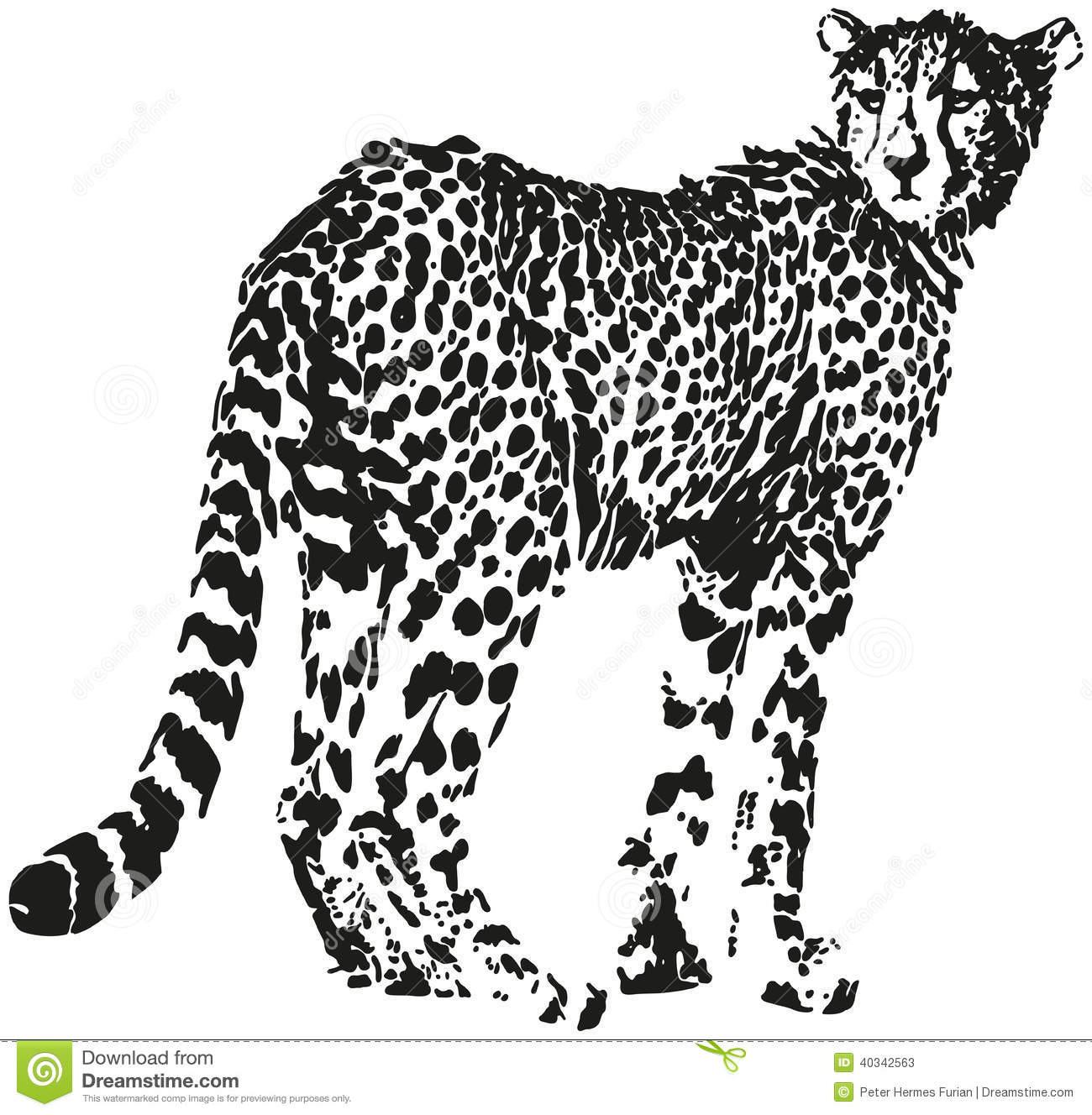 leopard stock vector  image of panthera  pattern  felidae
