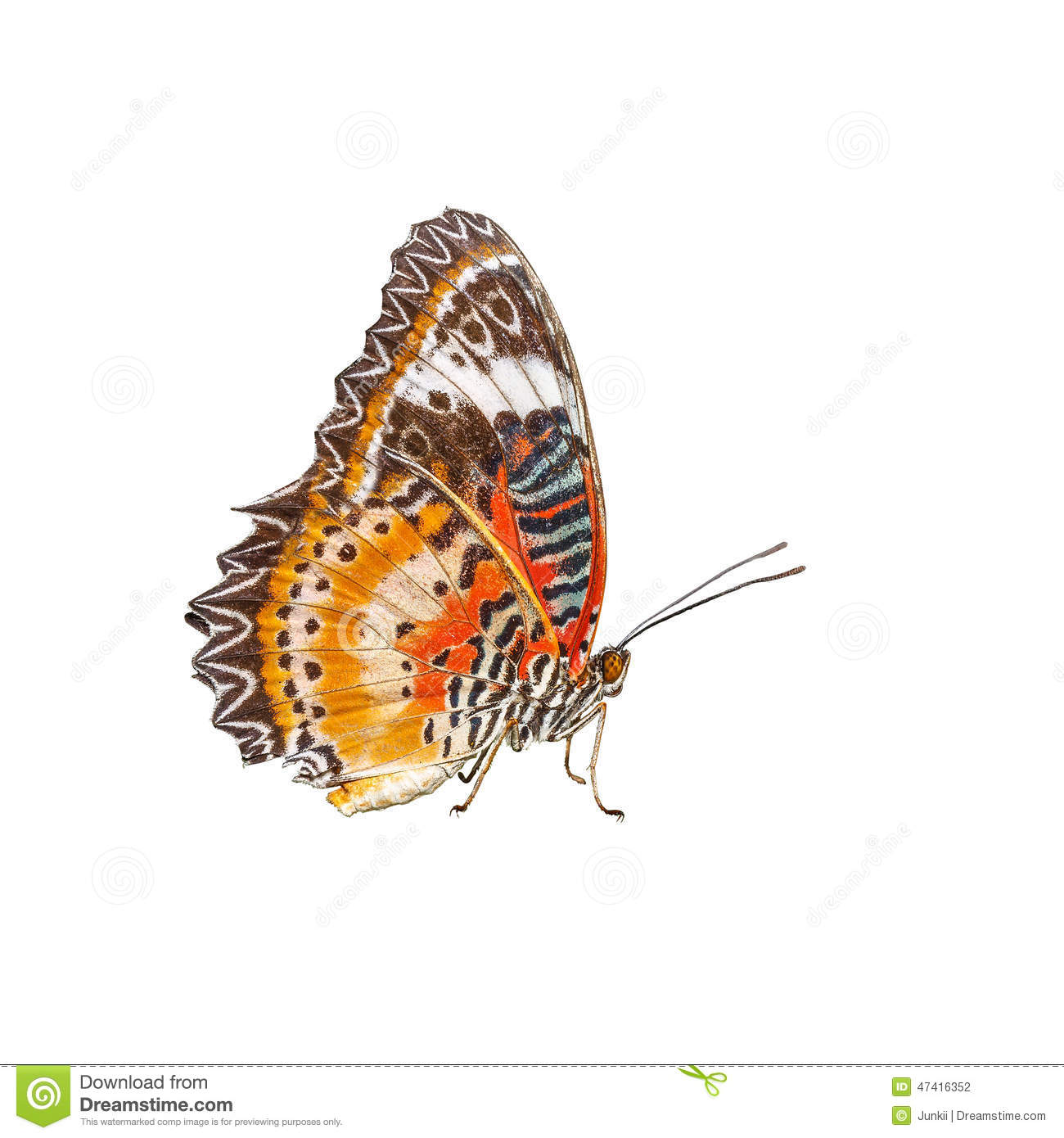 Leopard Lace Butterfly (Cethosia cyane) Isolated on White background