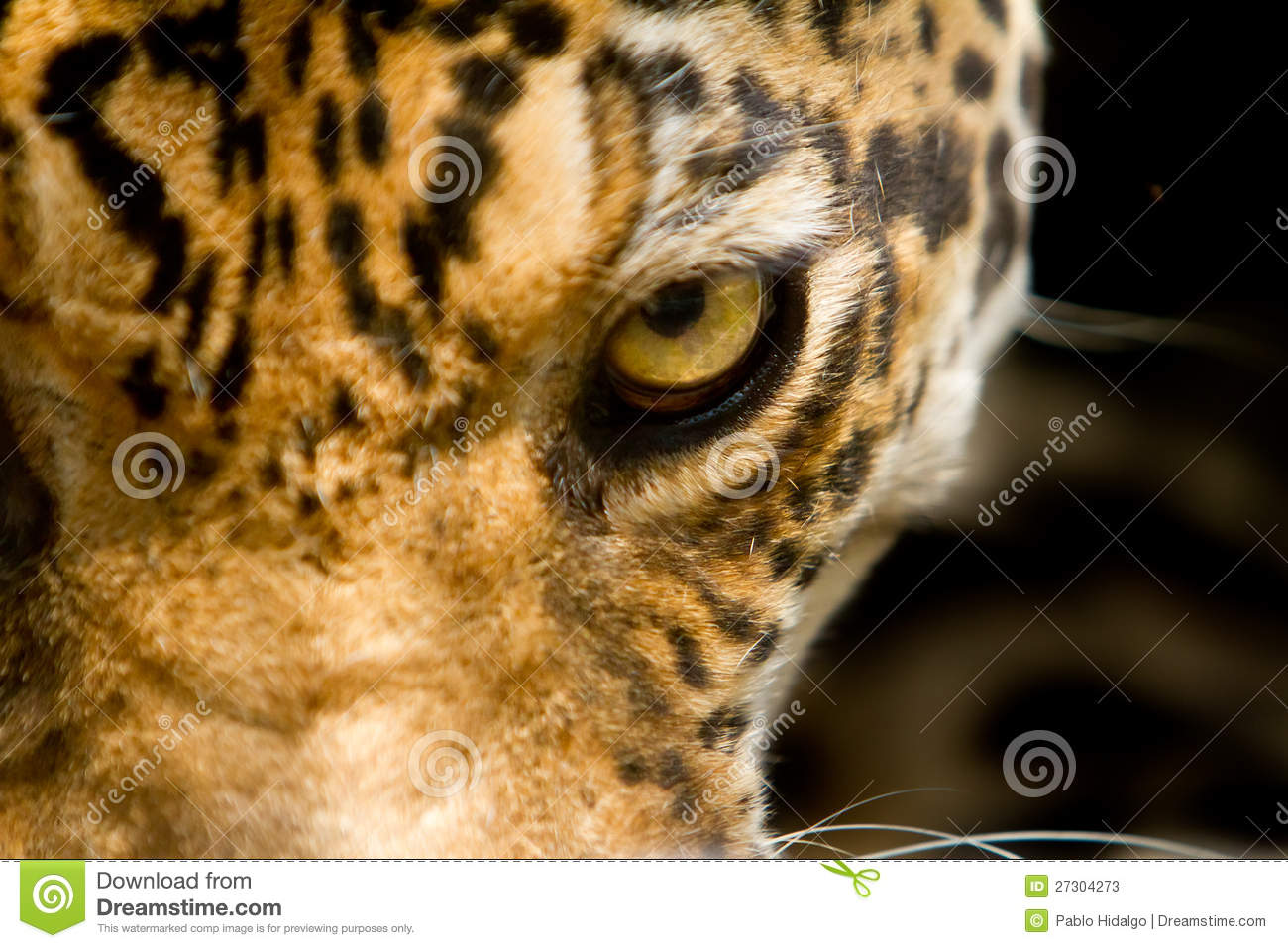 leopard eye close up - photo #16