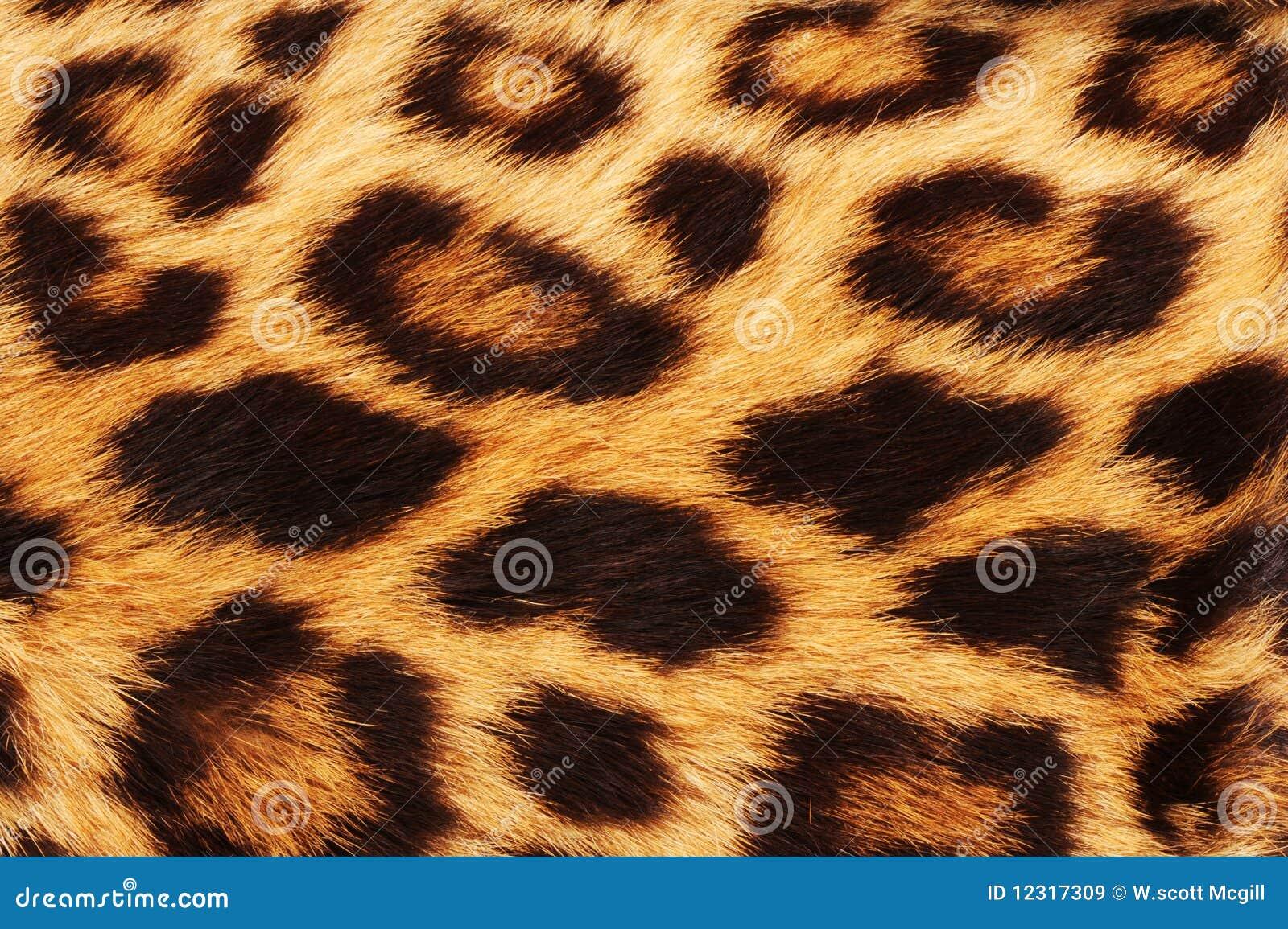 Leopard Skin Spots.