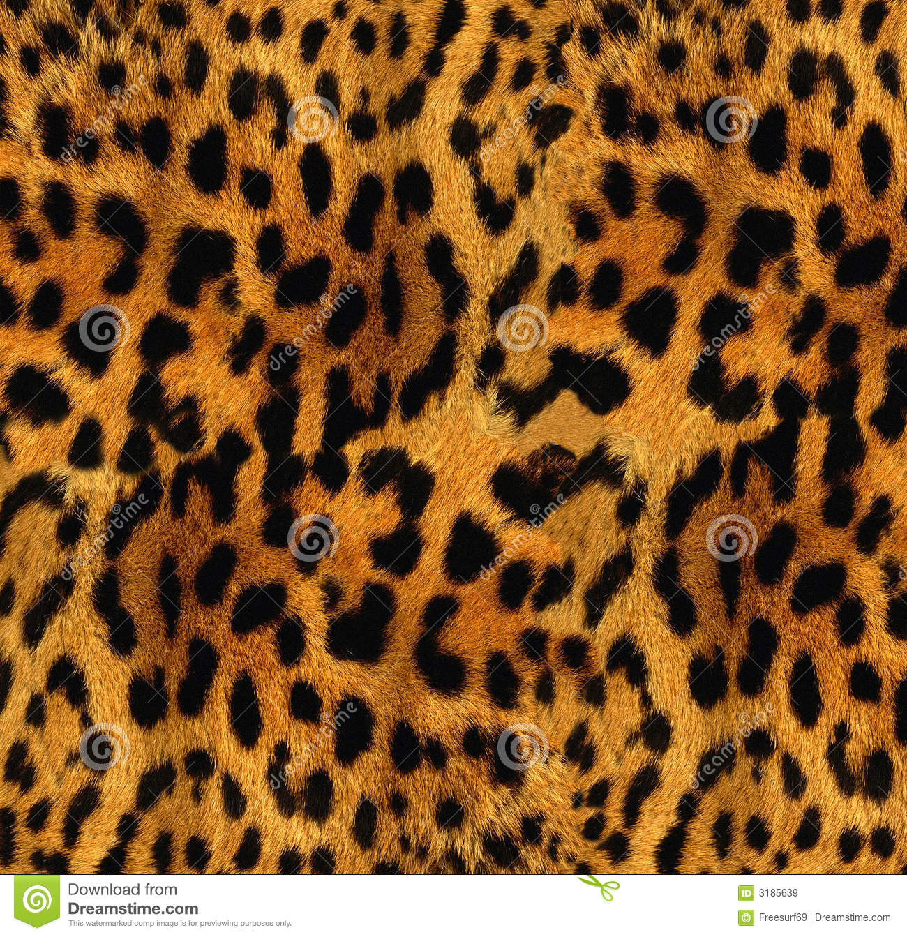Leopard texture stock image. Image of leopard, hunting - 3185639