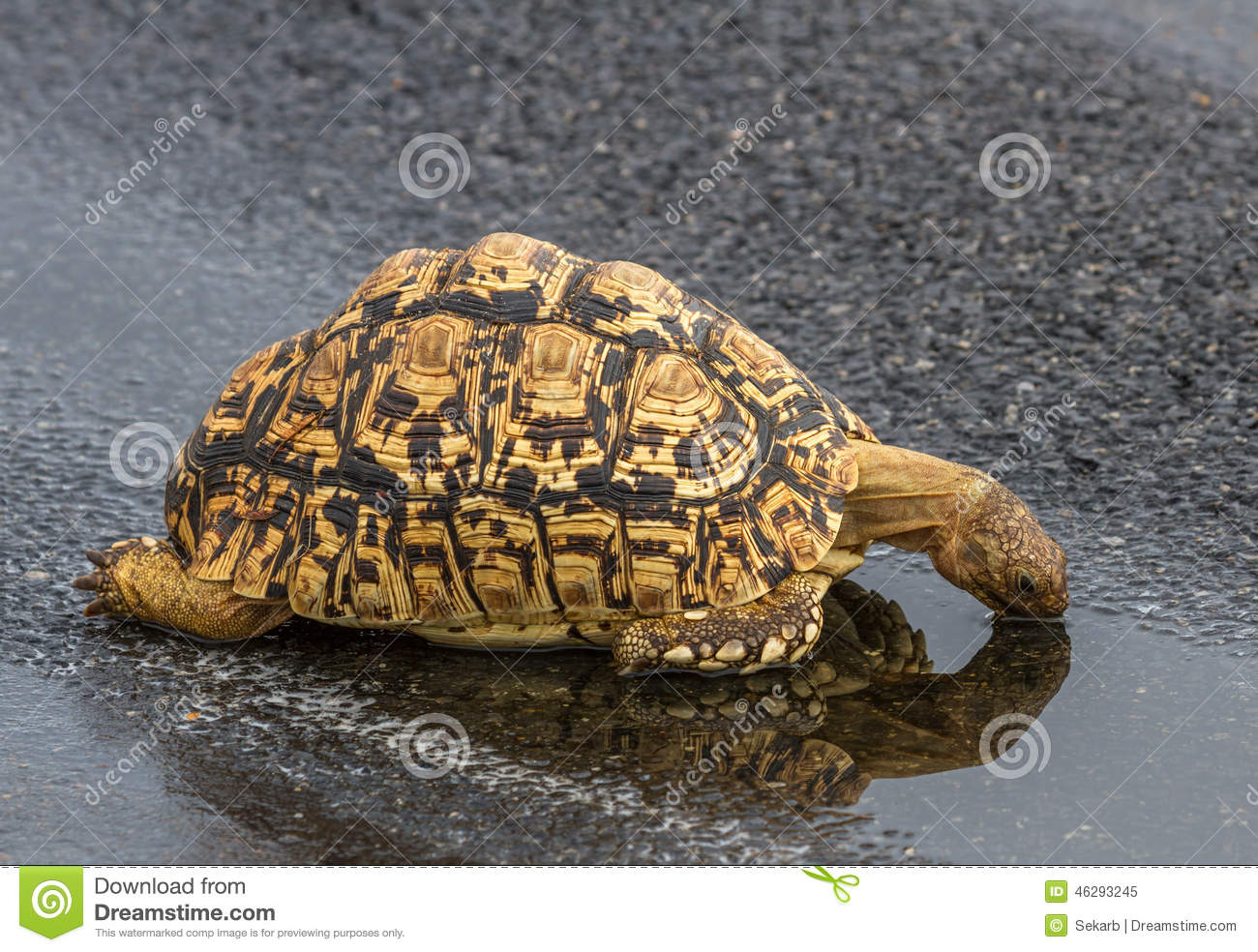 do tortoises drink water
