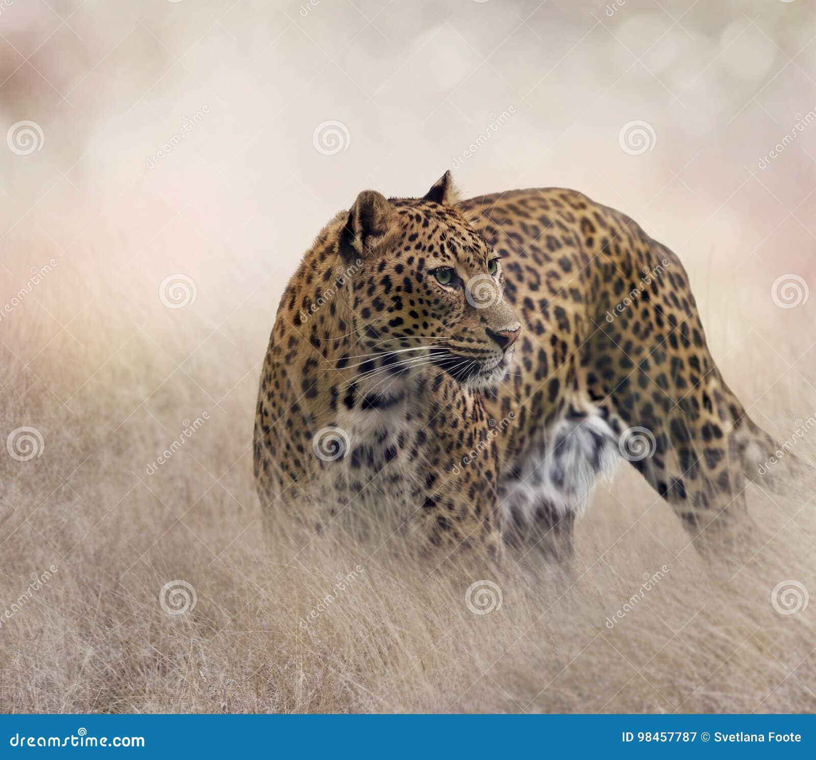 Leopardo en la hierba