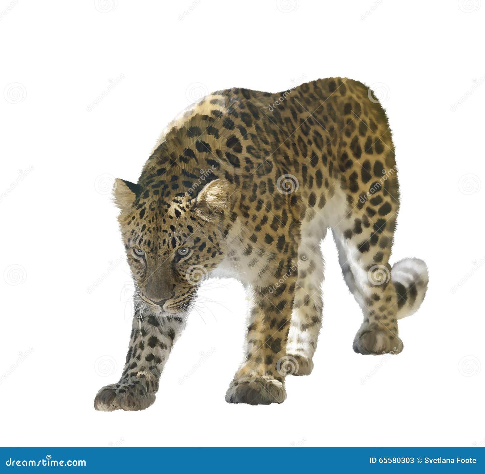 Leopardo isolado no branco