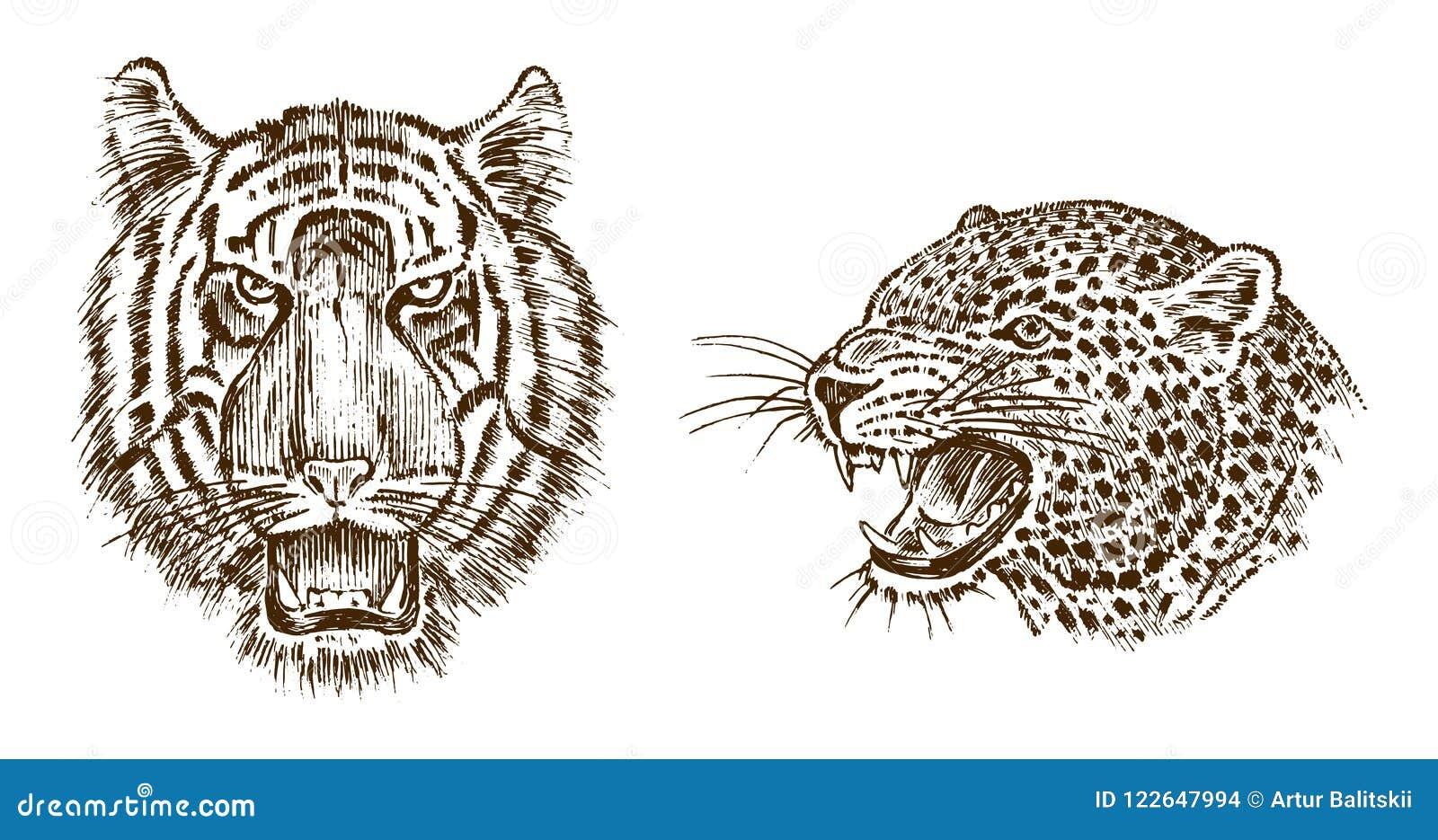 Leopardo Selvaggio Giapponese Dellanimale E Della Tigre Gatto