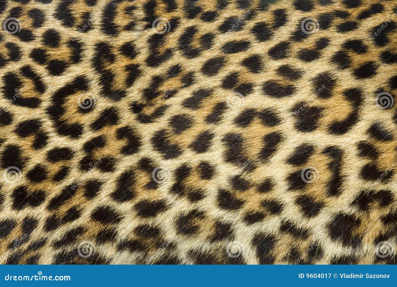 Leopardpelzbeschaffenheit