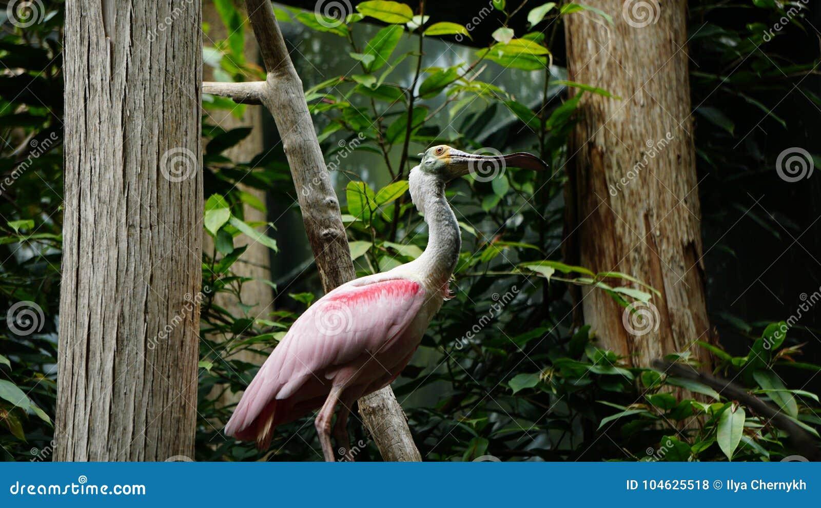Download Lepelrekening stock foto. Afbeelding bestaande uit habitat - 104625518