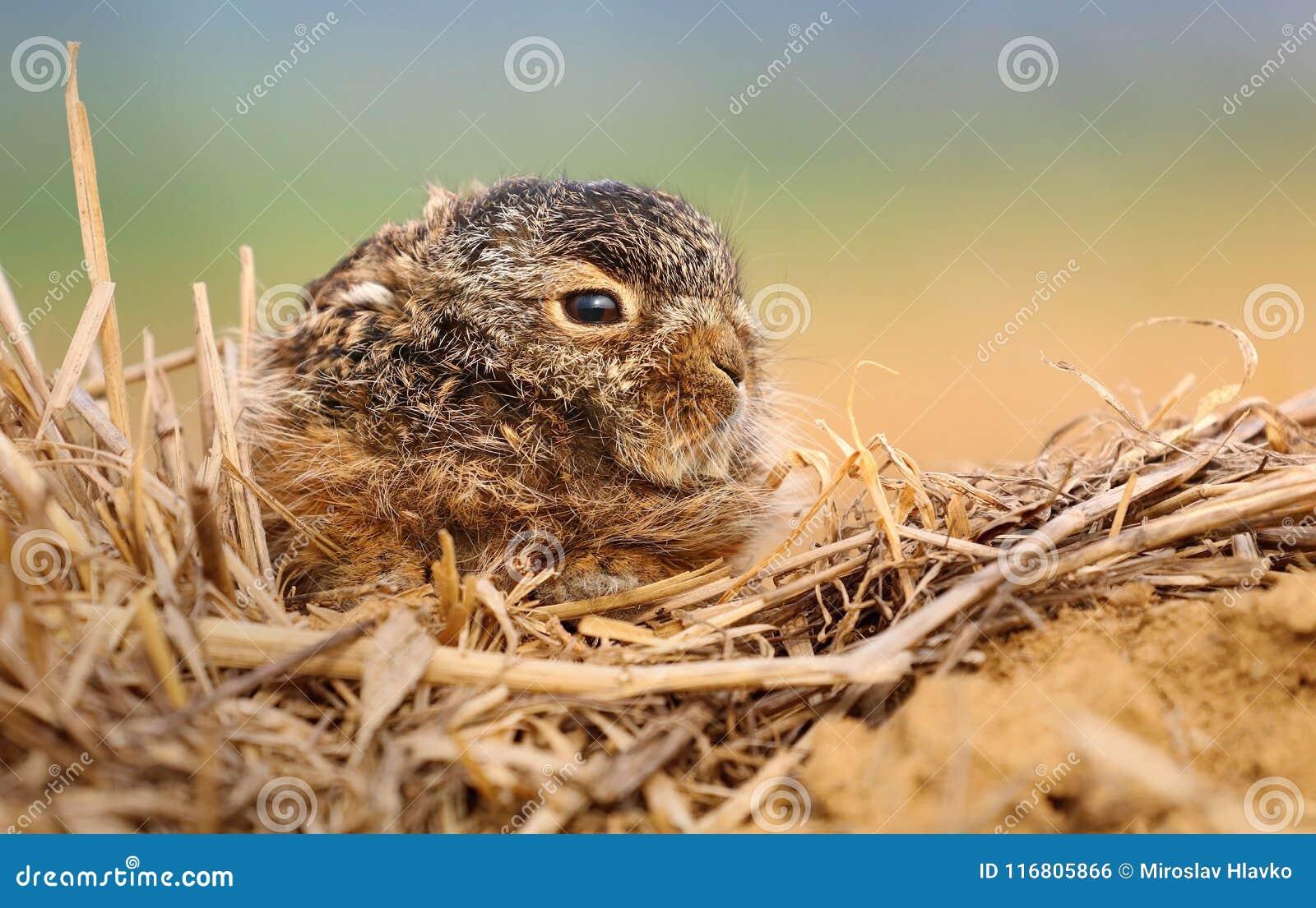 Lepre adorabile del bambino nel campo