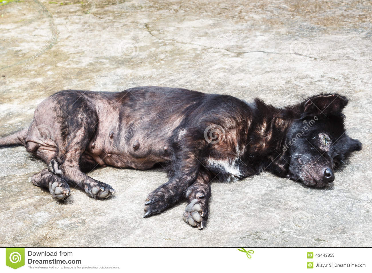 Skin Disease Pictures In Dogs