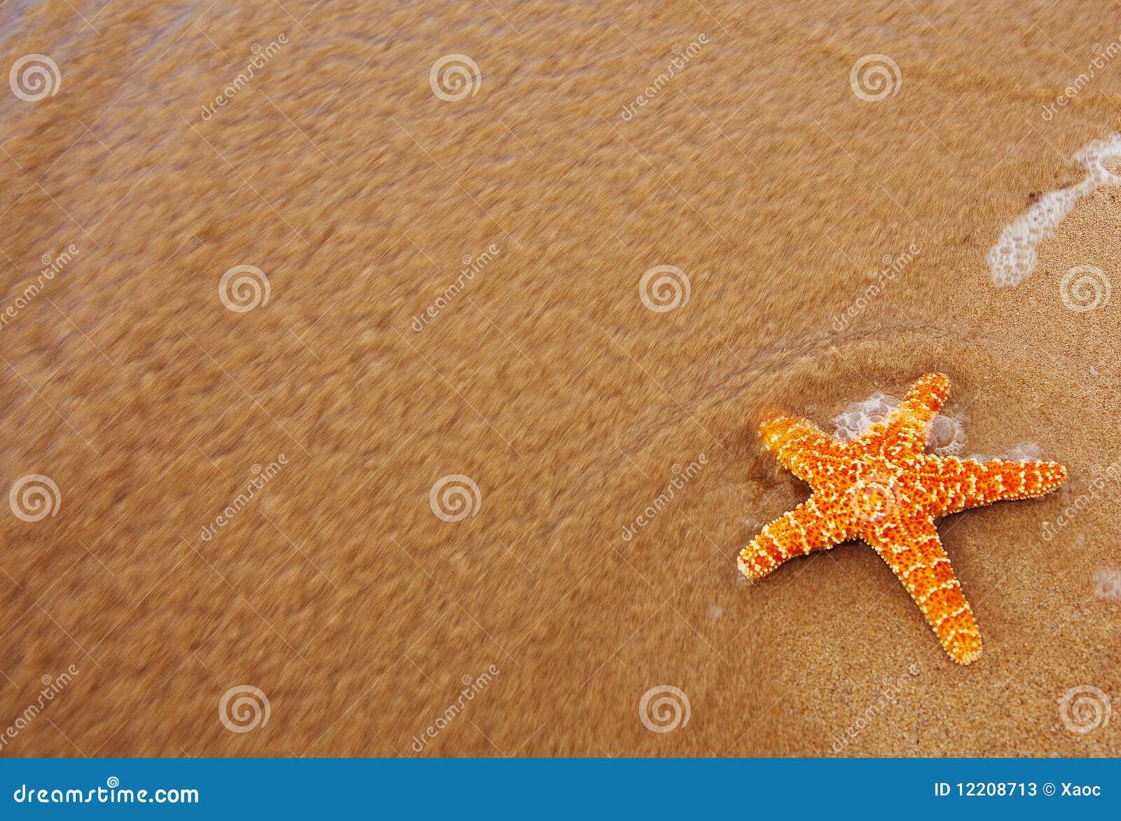 Les étoiles de mer ont rincé de l océan